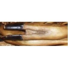 Ножка сарны копченая