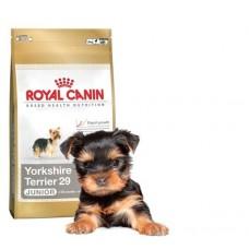 RC Йорк щенки  1,5 кг